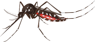 big-mosquito