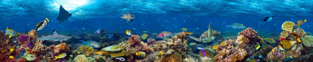colorful super wide underwater coral reef panorama banner background with many fishes turtle shark and marine life